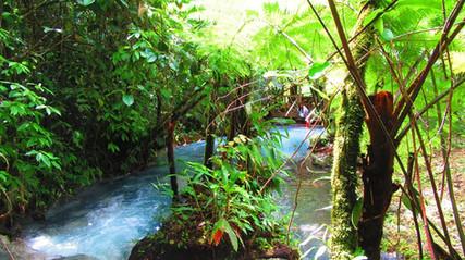 Guanacaste TOKU Rainforest