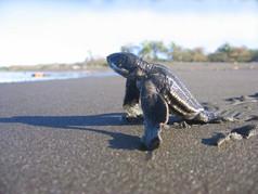 Tamarindo Turtle Tour.jpg