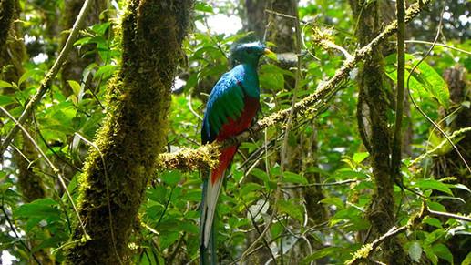 Cloud Forest Tour Costa Rica from Tamari