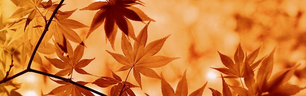 magnolia-outdoors-sale-sommer-herbst-summer-autumn-shop.jpg