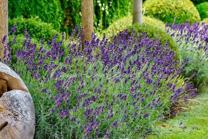 Moderner_Landhaus_Garten-07.jpg