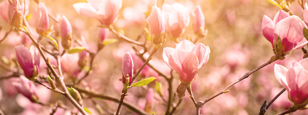 magnolia-outdoors-philosophie.jpg