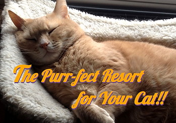 PurrFect Resort for Your Cat.png