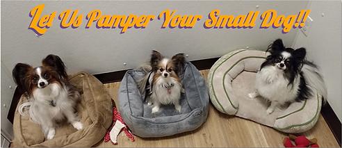 Let Us Pamper Yor Small Dog.png