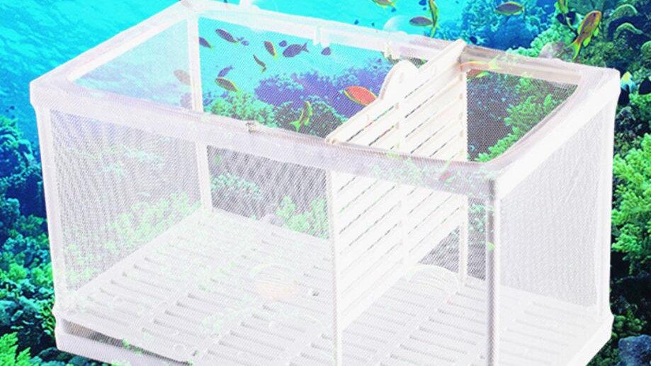 水族館 繁殖箱 Lサイズ  ダブルグッピー 孵化インキュベーター 隔離ボックス 多機能 繁殖水槽 隔離ネット 産卵箱  吸盤付き
