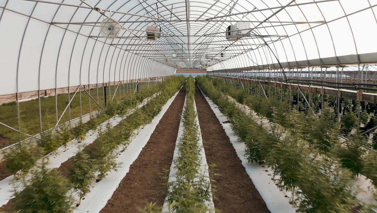 Sustainable CBD Farm