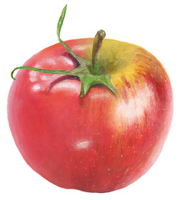 Tomapfel oder Apfate