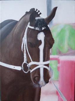 Pferd Gustav
