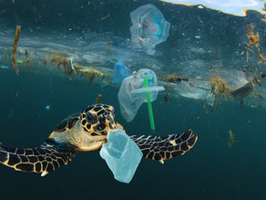 The Links Between Plastic Pollution and the Climate Crisis