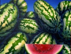 Texas Melons