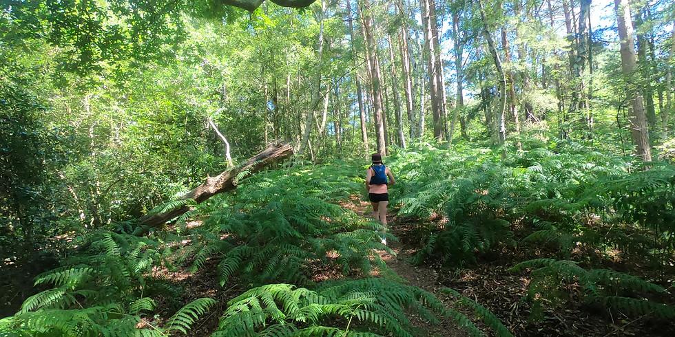 She Runs Outdoors Ambersham, Heyshott and Graffham common 14km Women's Trail Run