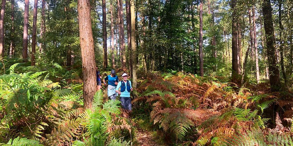St Leonard's Forest, Horsham 10km Women's Trail Run