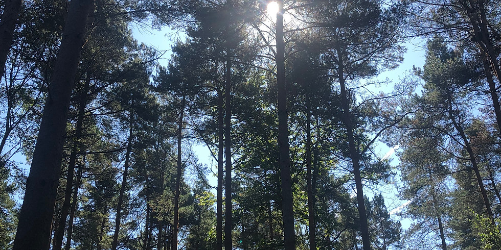St Leonard's Forest, Horsham 10km Trail Run