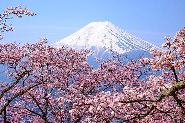Cherry-blossoms-Japan-2-1000x667-72-885x