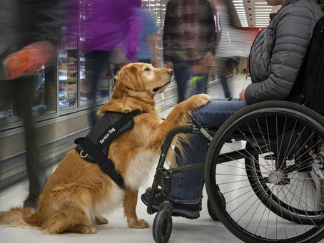 Veterans Can Train And Adopt Service Dogs Under A New Law Signed By Biden
