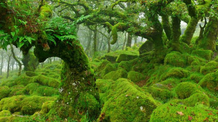 Forest Moss ( 1 gallon bag )