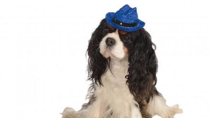 Cowboy Blue Glitter Bougie Pooch Hat