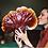 Thumbnail: Red Reishi (Ganoderma lucidum) Tissue Culture Syringe