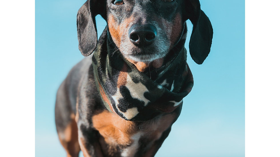 Camo-Dog Hunting Scarf