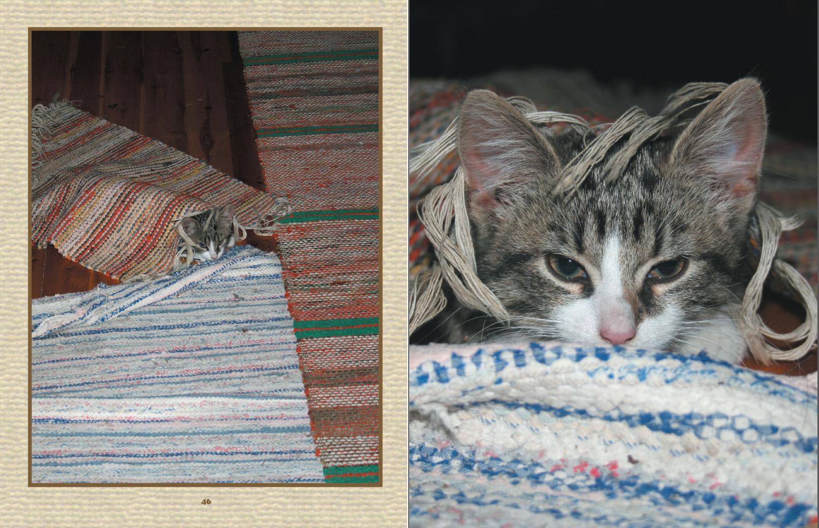 Minä olen Kitty Kissanpentu