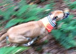 Safe Trail Dog Gear