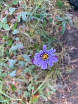 Wildflowers Walking Tour