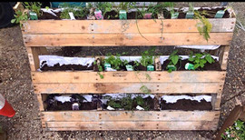 Recycled Palletts