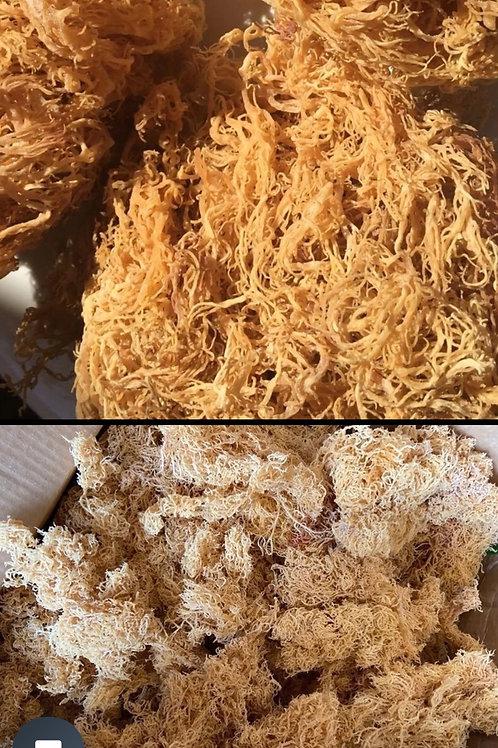 Organic Seamoss, Bladderwrack, Burdock  root