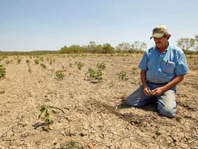 El agua para el cultivo se cosecha con COSECHA DE LLUVIA