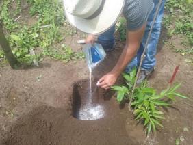 Como parte del Proyecto de Fortalecimiento de la Cadena Productiva de la Caña Guadúa, la prefectura