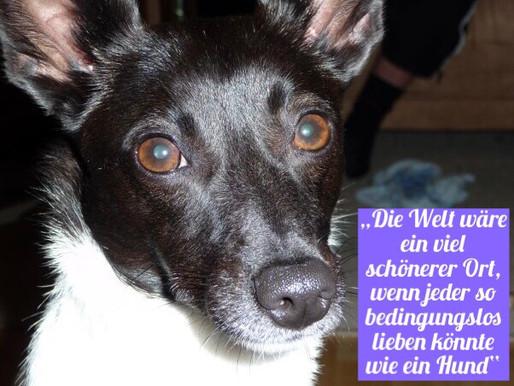 Wacht auf!!! Bedingungslose Liebe ist möglich, die Tierwelt macht es vor ❤️☝️