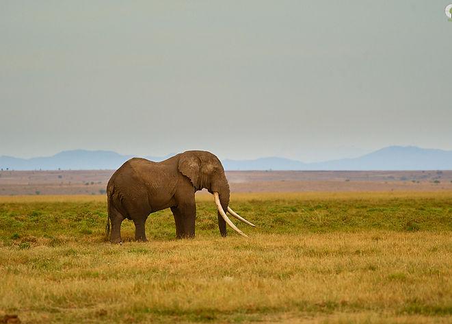 Amboseli-Tim-_D3S8789.jpg