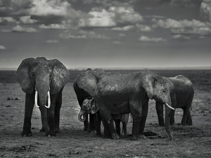 Amboseli-Elephants_6454187.jpg
