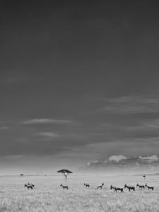 19.Amboseli-_6454371.jpg