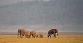 Elephant-Corbett.jpg