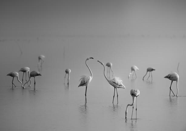 24.Flamingo-Pulicat.jpg