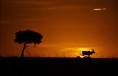 Sun Set, Masai Mara