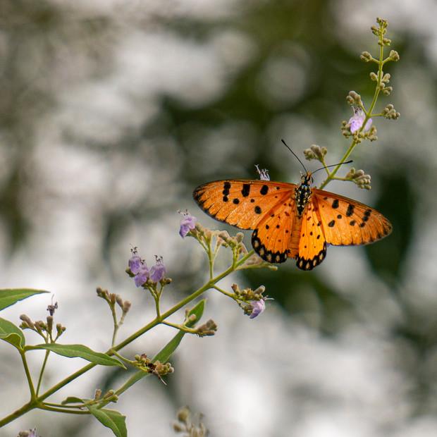 ButterFly-20140726-_DSC0776.jpg