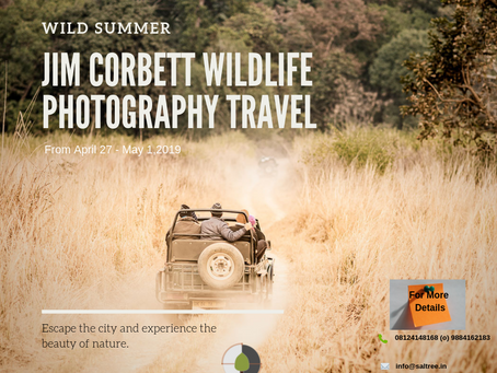 Jim Corbett Summer Camp