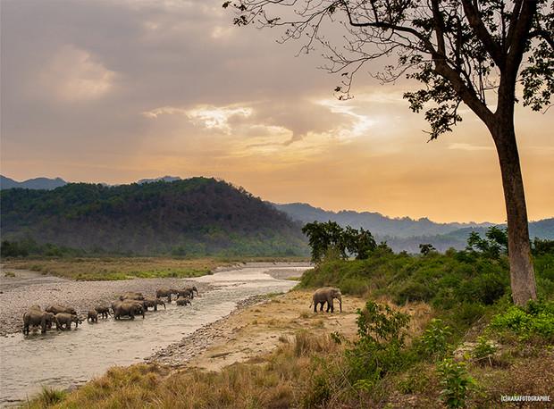 Elephants,Corbett