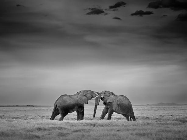 22.Amboseli-Elephant-_6453953.jpg