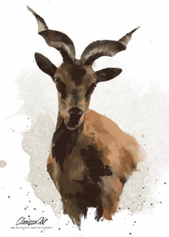 wild_goat___watercolor_by_clarisse2dart_
