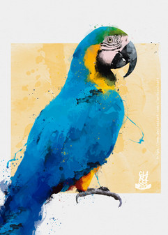 guacamayo__ara_ararauna_____macaw_by_cla