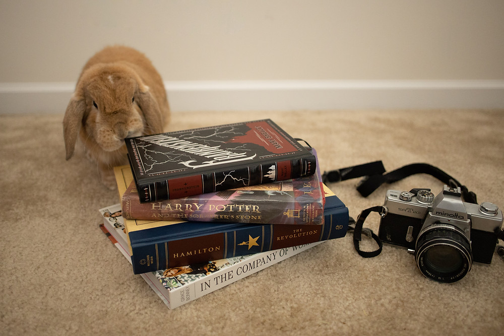 cute bunny looking at books and film camera