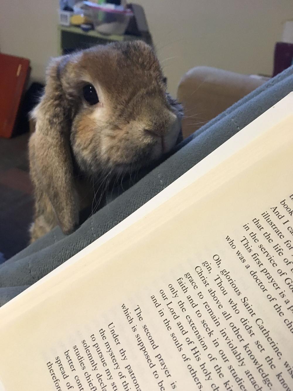 adorable bunny book