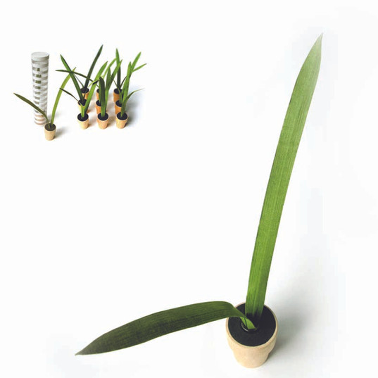 plant it.jpg