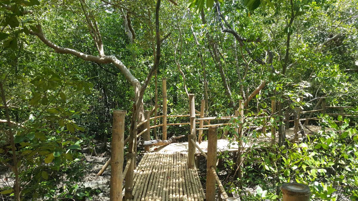 Bamboo Bridge.jpg