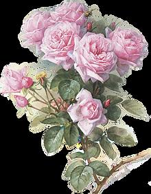 Заказ роз почтой
