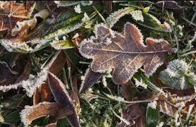 Frozen Plants?  Here's Some Thoughts...