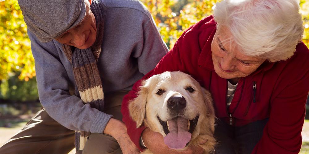 Elderly couple with pet golden retriever